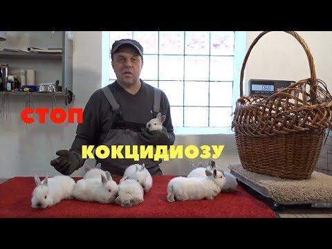 Как применять Стоп-кокцид для кроликов?