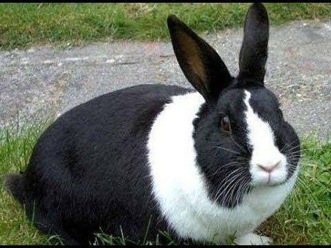 Сколько крольчиха вынашивает крольчат и как за ней ухаживать?