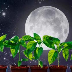 фото Лунный календарь посадок на 2021 год