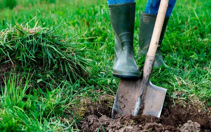 инструкция посадки голубой ели