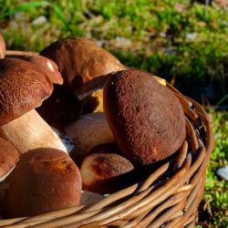 фото Что можно сделать с белым грибом. 9 интересных вариантов