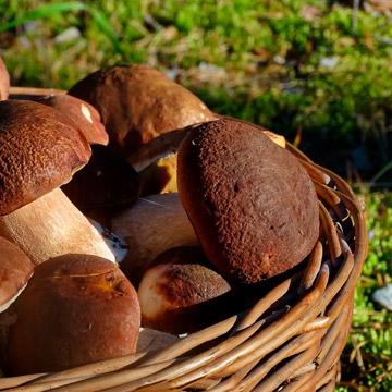 Что можно сделать с белым грибом. 9 интересных вариантов