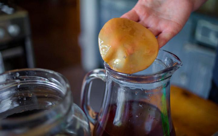 Размножение чайного гриба