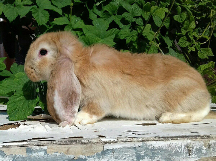 кролик на деревяшке
