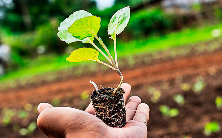 корневая система растения эффект гетероуаксина