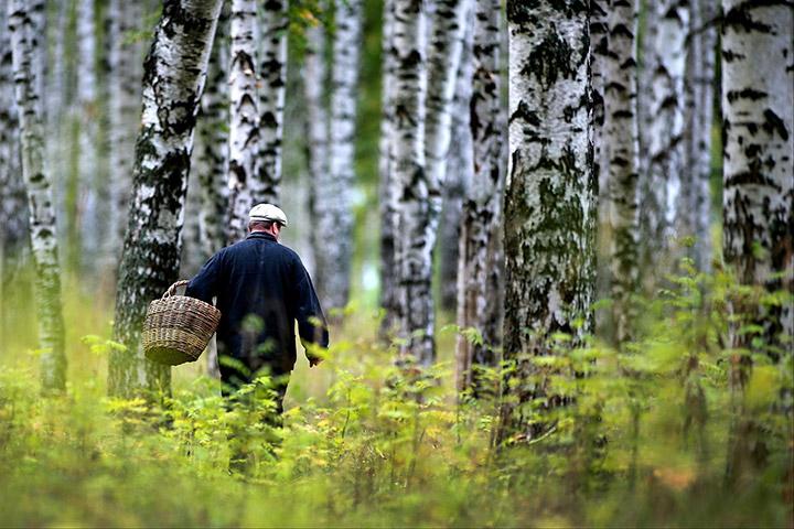 Грибник ищет грибы