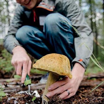 Как правильно искать и находить грибы в лесу?