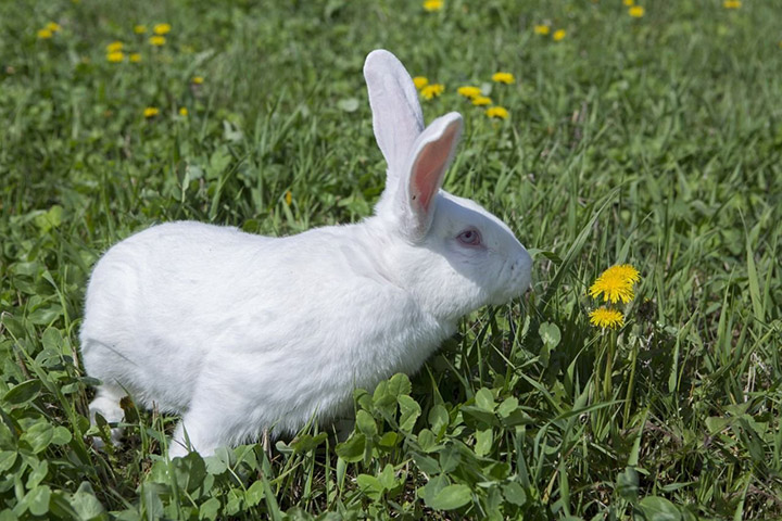 кролик на улице