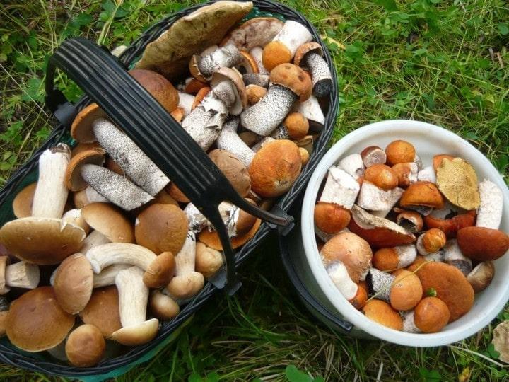 сбор и хранение грибов