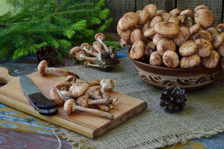 хранение грибов дома