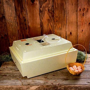 Какой инкубатор лучше: золушка или несушка?