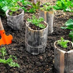 фотоКак вырастить рассаду нестандартным способом