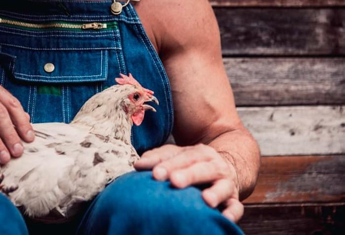 Держит курицу на руках фото