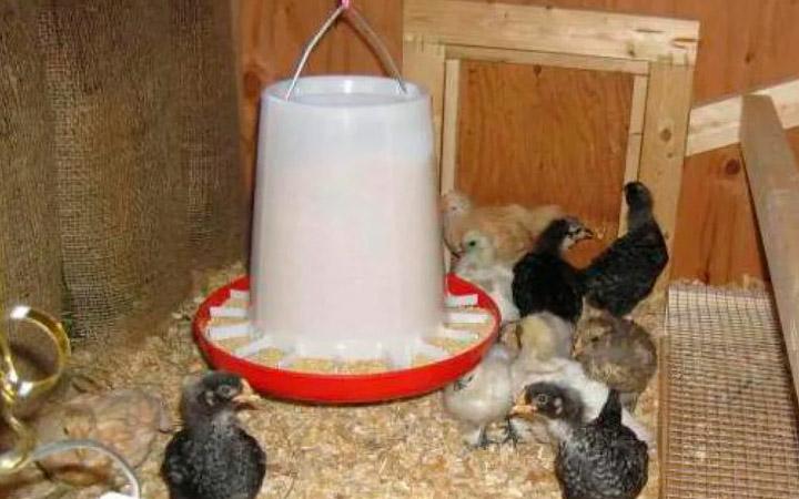 Вакуумная кормушка для кур из пластикового ведра