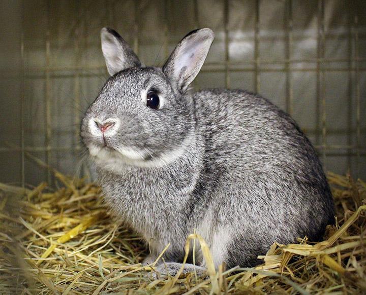 кролик на сене