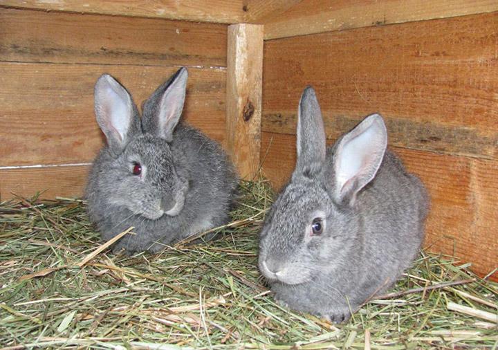 кролики на сене