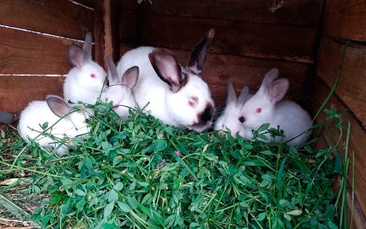 корм для кроликов из зелени