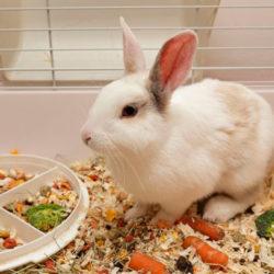 фото Чем и как правильно кормить кролей в домашних условиях