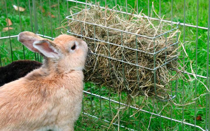 Грубый корм для кроликов