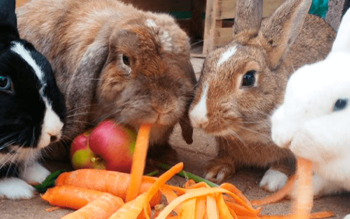 Сочный корм для кроликов