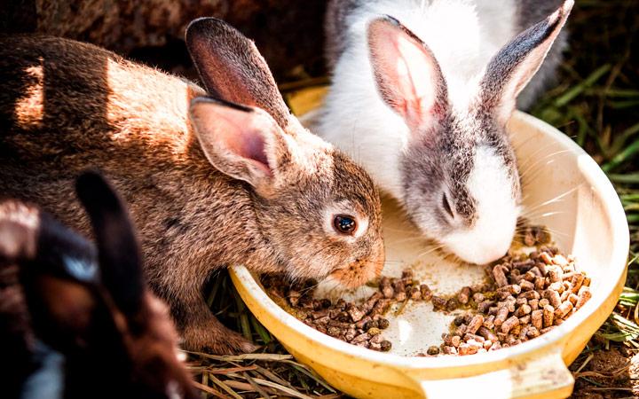 Концентрированный корм для кроликов