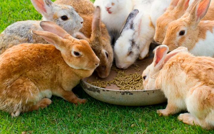 Витамины и добавки для кроликов
