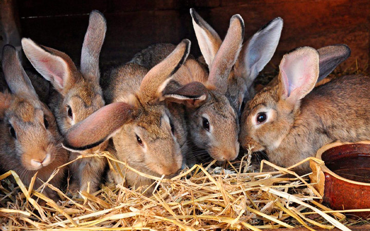 Как кормить кроликов в разное время года