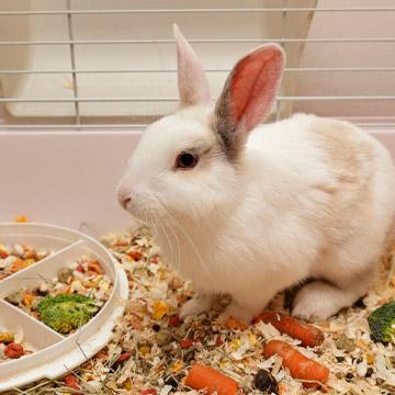 Чем и как правильно кормить кролей в домашних условиях