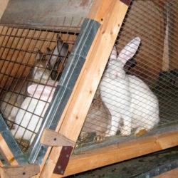 фото Как правильно содержать кролей в клетке?
