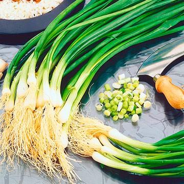 Зеленый лук для взрослых бройлеров и цыплят
