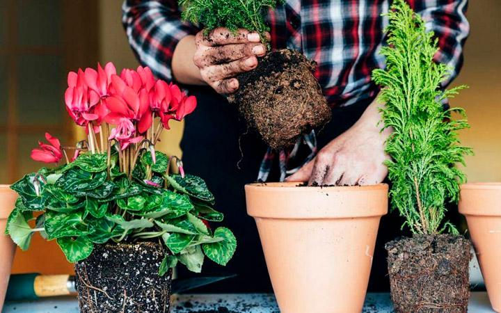 пересаживание домашних цветов в ноябре