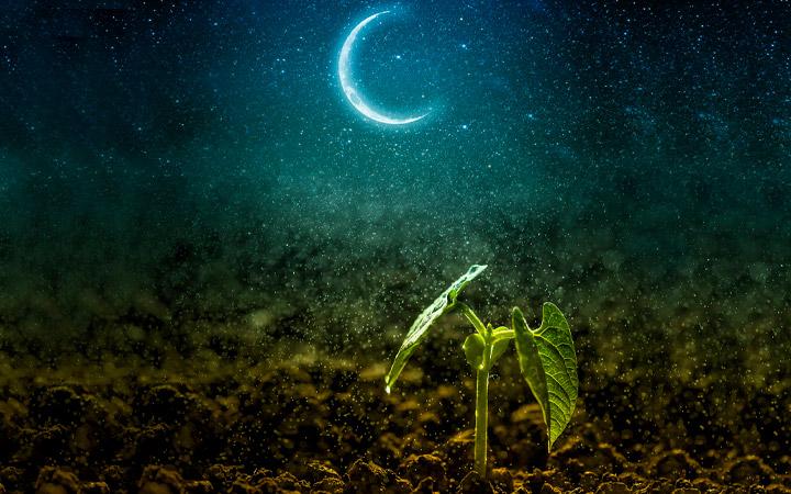 Влияние Луны на рост растений