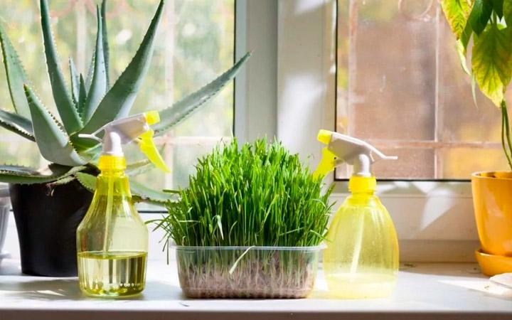 увлажнение воздуха для комнатных растений