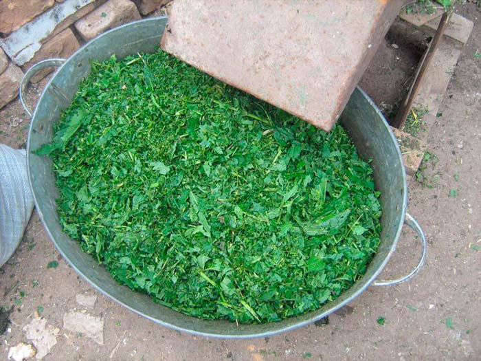 Измельченная трава для кур