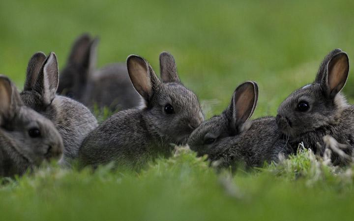 кролики на улице