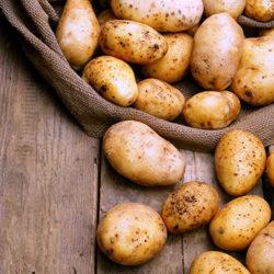 фото Как правильно вводить картофель в рацион кроликов?