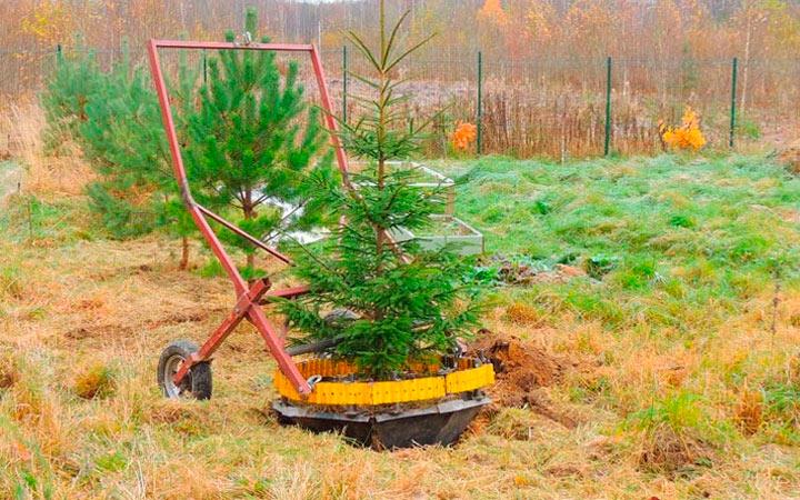 пересадка деревьев комом