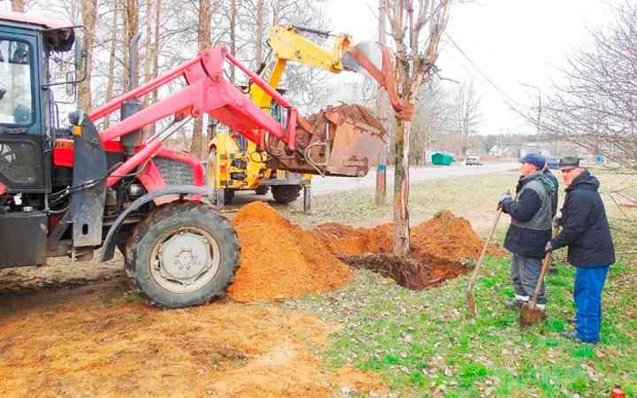 пересадка деревьев трактором