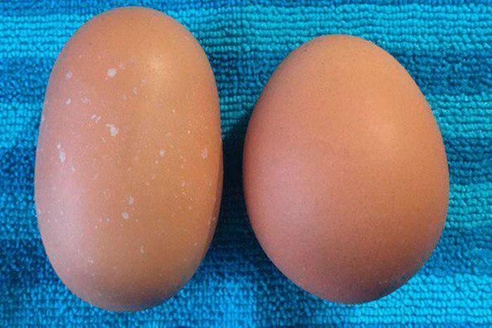 Яйца разной формы