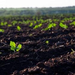 фотоПодготовка земли для рассады