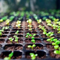 фотоКакую рассаду можно посадить?