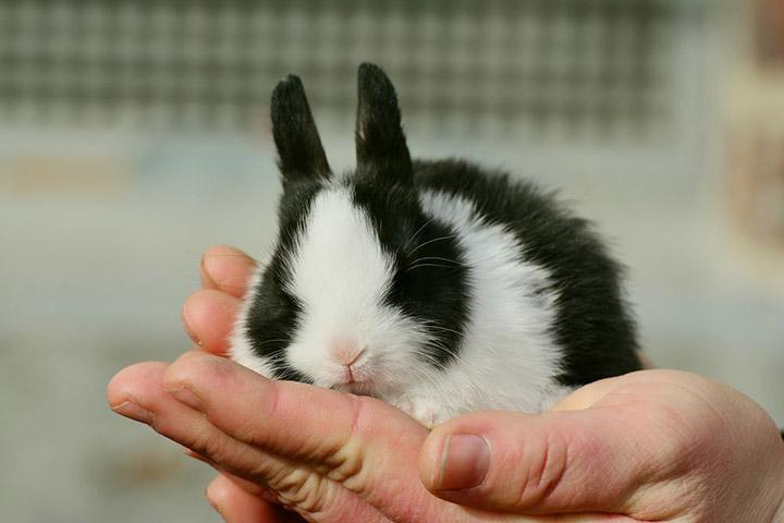 кролик на руке