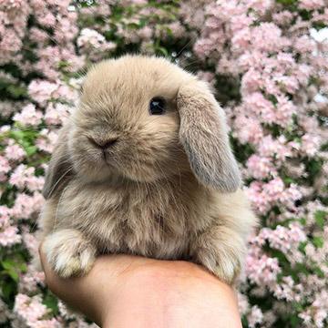 Сколько живут кролики в домашних условиях?