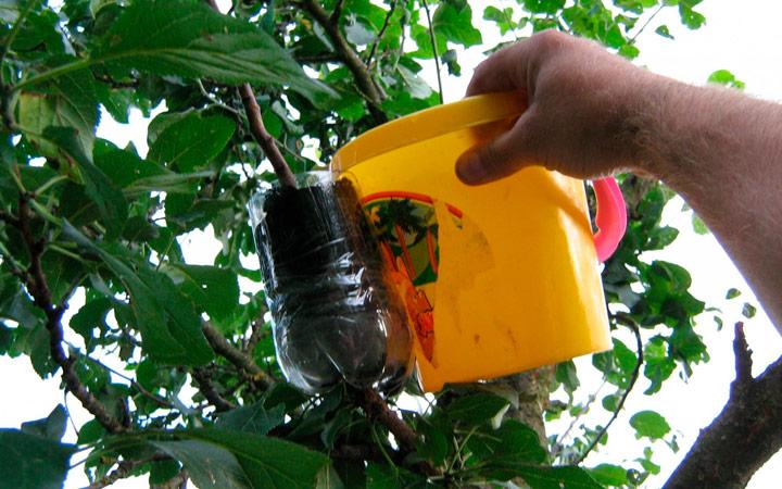Воздушная отводка для саженца яблони