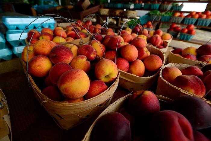 Персики сорта Джаминат фото