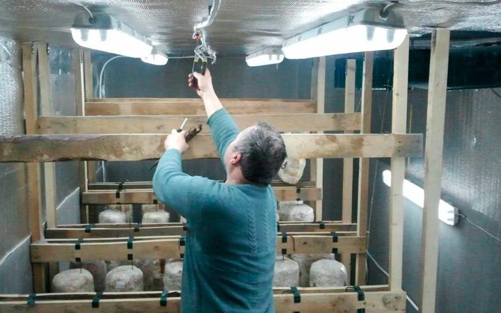 Освещение и вентиляция при выращивании шампиньонов