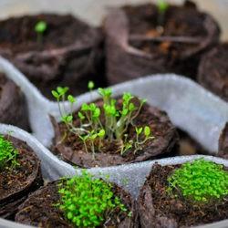 фото Таблетки для выращивания рассады