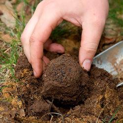 фото Где в России растут трюфели и как их найти?