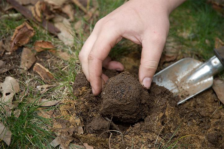 помещение гриба в почву