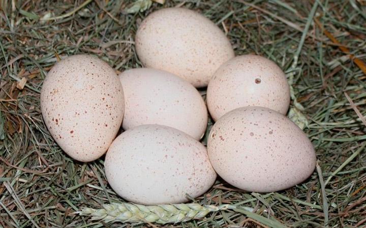 отбор яиц для инкубатора